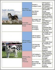 A kölykök törzskönyve/Pedigree of the puppies